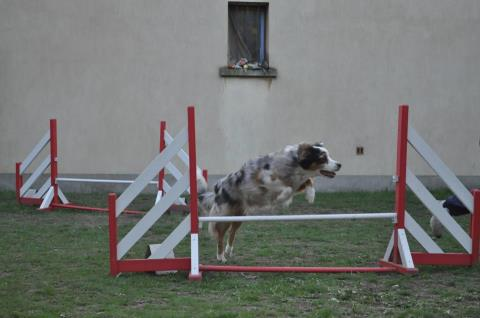 Cannelle agility