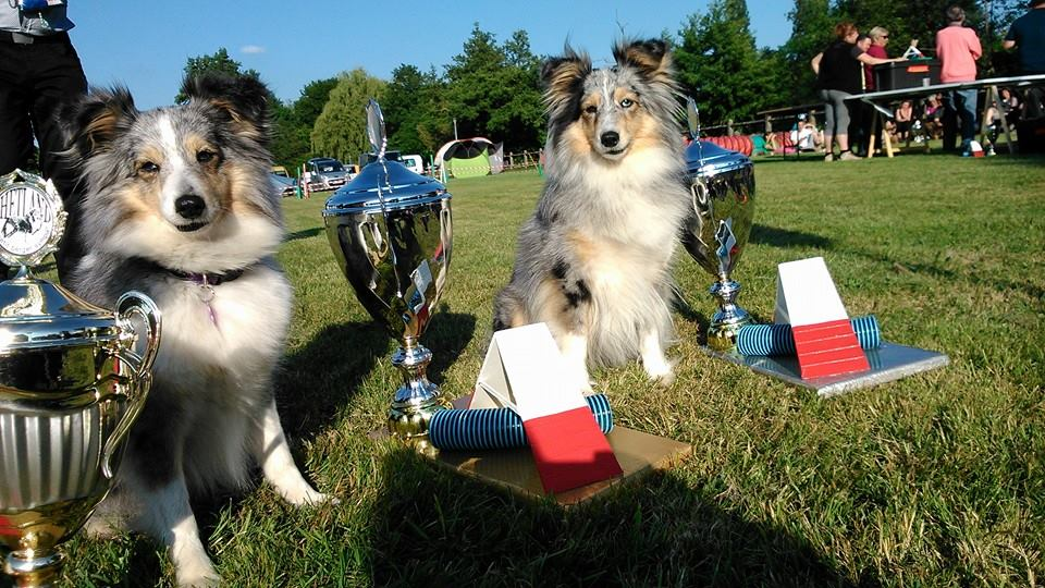 championnes de france des shetlands 2014